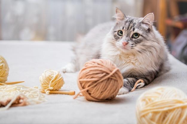푹신한 귀여운 회색 고양이는 실이 엉킨 공을 가지고 놀고, 타래를 사냥합니다