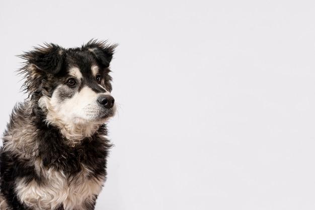 Пушистая собака на белом фоне