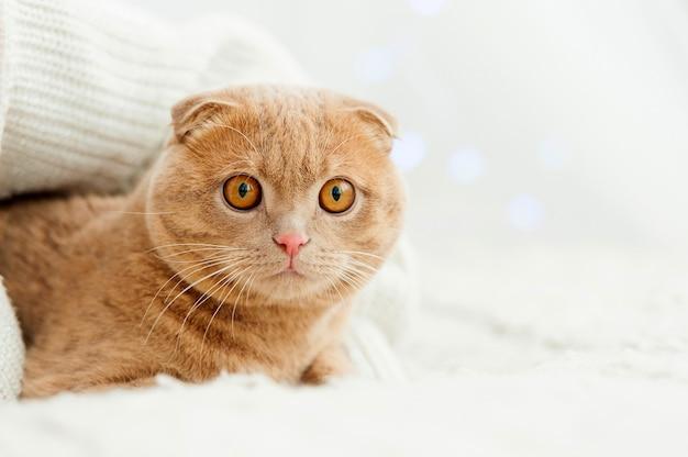 -fluffy ginger cat comfortably settled on bed
