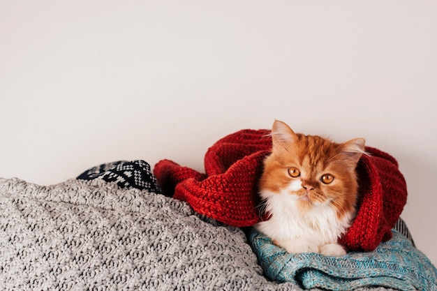 Fluffy ginger kitten in a heap of woolen knitted clothes copy space.