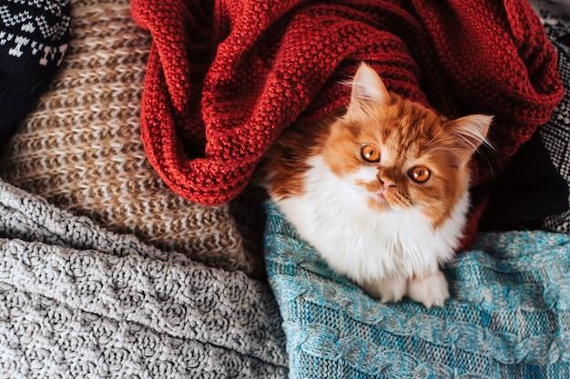 Fluffy ginger kitten in a heap of woolen knitted clothes.