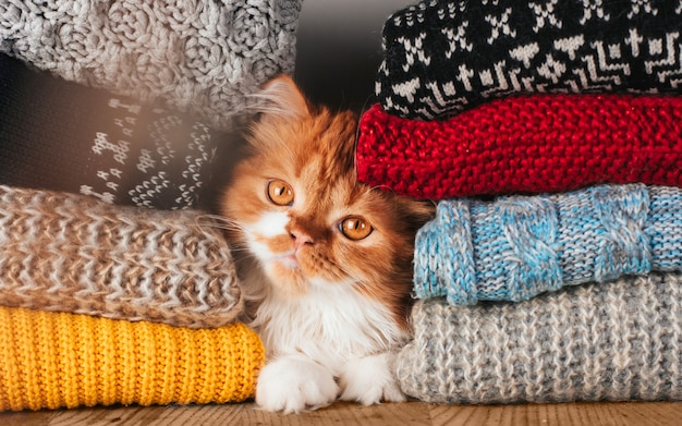 A fluffy ginger kitten hid between stacks of woolen knitted clothes