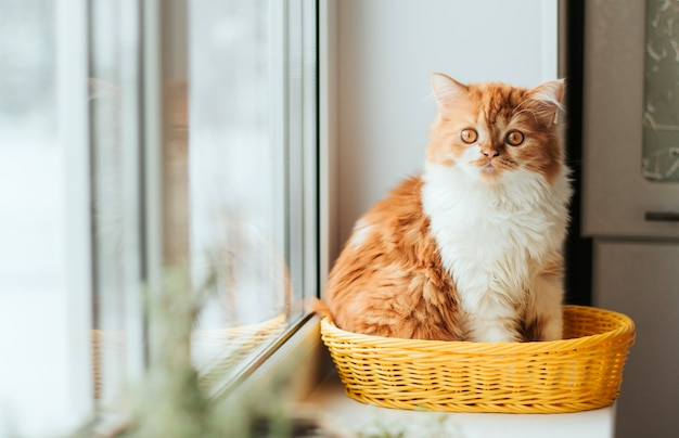A fluffy ginger kitten sits in a yellow basket on a windowsill.