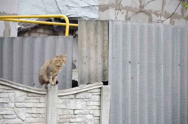 Fluffy ginger stripped tabby cat sitting on old fence at residental house