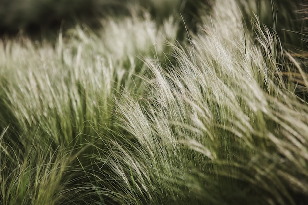 Fluffy grasses in the wind , blurred, selective focus. horizontal arrangement Premium Photo