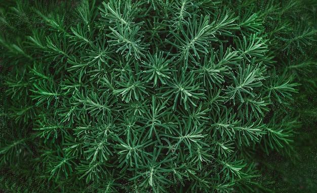 Пушистая поверхность зеленой травы