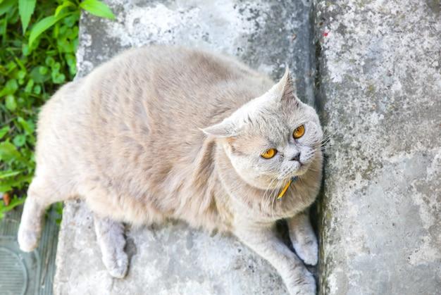 푹신한 회색 고양이 야외. 귀여운 집 애완 동물. 여름 태양을 즐기고 있습니다.