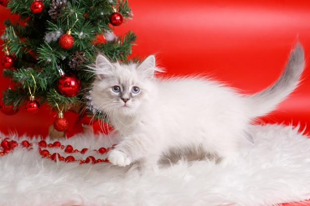 Пушистый серый котенок на красном пространстве, новогодняя елка, новогоднее пространство
