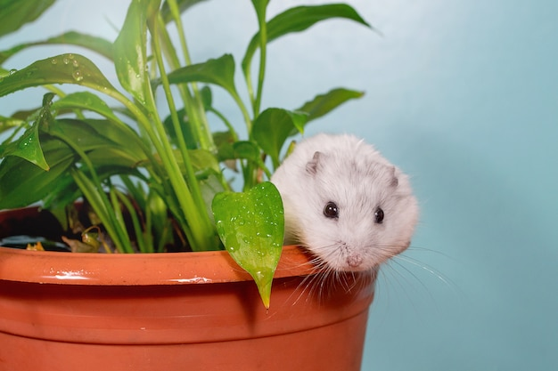Fluffy hamster on a table with a green flower