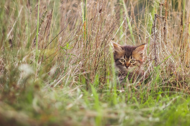 Fluffy kitten alone in the grass in summer