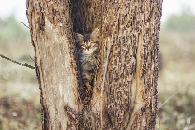 Fluffy kitten alone in the hollow of a tree in summer