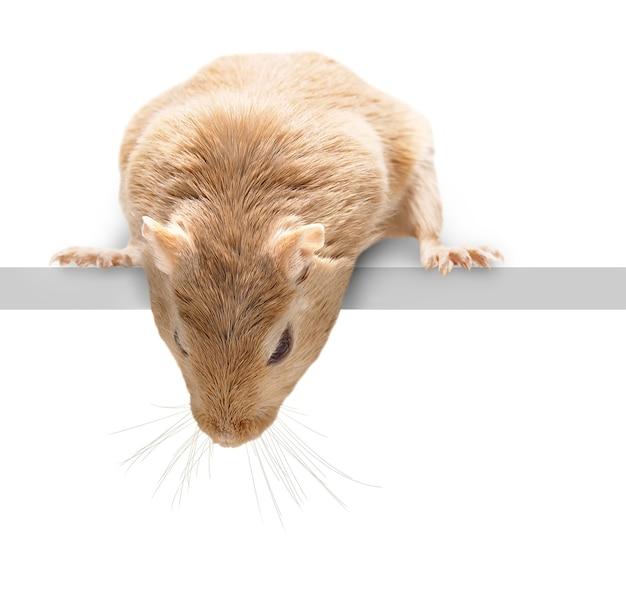 푹신한 마우스가 회색 선에 앉아 아래를 내려다 보면서