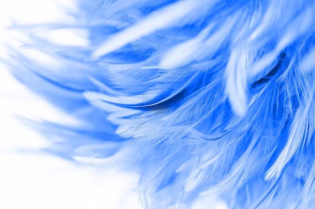Пушистые куриные перья в мягком и размытом стиле для фона