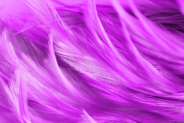 Fluffy of pink chickens feather texture abstract for background, soft color and blur style