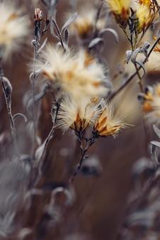 乾燥した小さな花が付いているふわふわの植物。セレクティブフォーカス