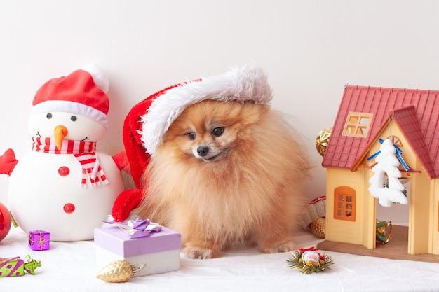 ふわふわのポメラニアンはサンタクロースの帽子に座って、クリスマスのおもちゃの周りの箱の中の贈り物を見ます