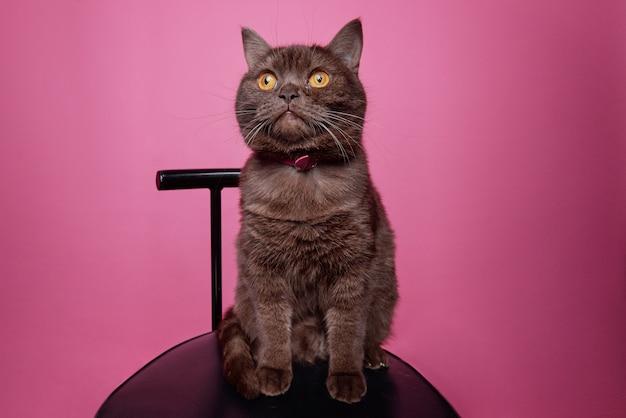 旅の準備ができて荷物を持ってスーツケースに座って、孤立して飼い主を待っているふわふわの純血種の黒猫