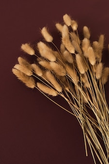 Fluffy rabbit bunny tail grass plant branches bouquet on burgundy