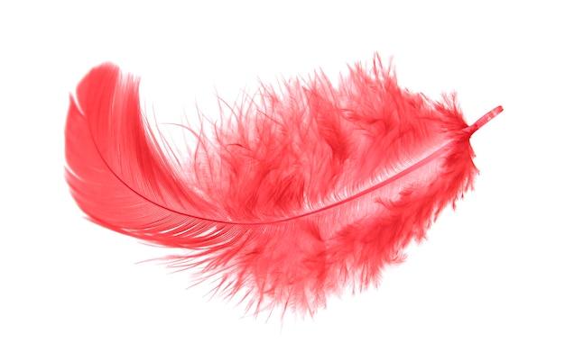 고립 된 무성 한 붉은 깃털