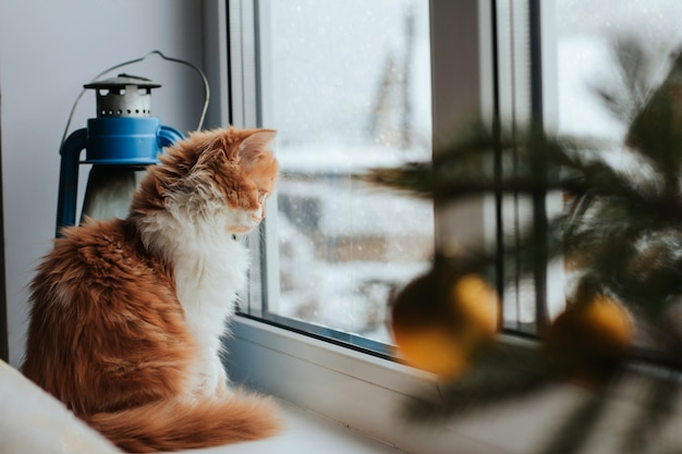 Fluffy red kitten sits on a windowsill and looks out the window