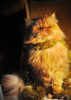 Портрет пушистого рыжего персидского кота с гирляндами на новый год и рождество
