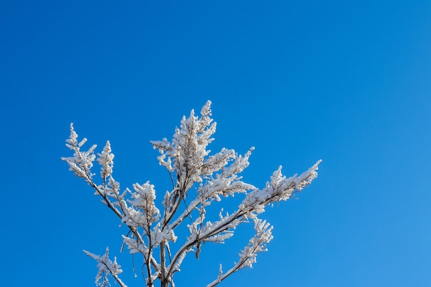 화창한 날씨에 푸른 하늘을 배경으로 푹신한 눈 덮인 나뭇가지