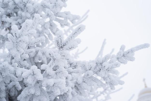푹신한 눈은 겨울에 공원의 크리스마스 트리에 놓여 있습니다