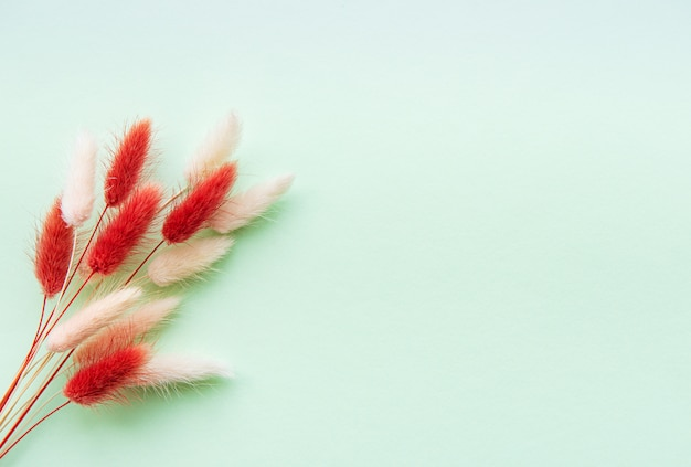Fluffy spikelet on pastel background