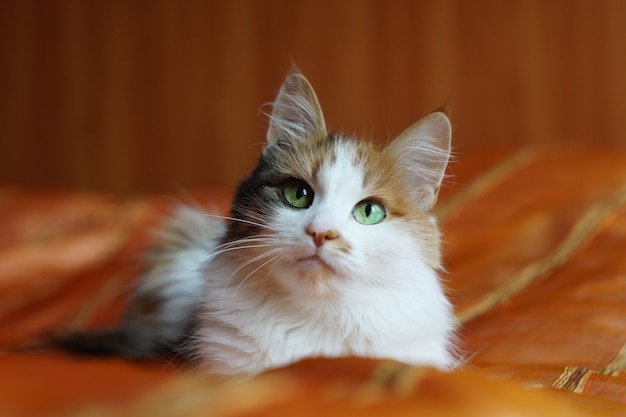 A fluffy spotted domestic cat with green eyes is lying on an orange blanket and looking at the camera.
