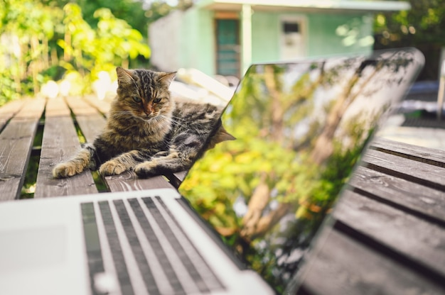 Fluffy street cat sitting on a wooden bench next to laptop computer with tree reflections outdoors in summer garden. remote online work concept