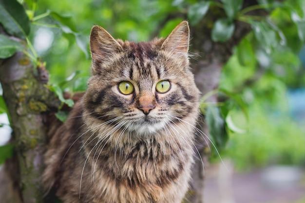 緑の葉の真ん中にある木の上のふわふわの縞模様の猫。猫のクローズアップの肖像_