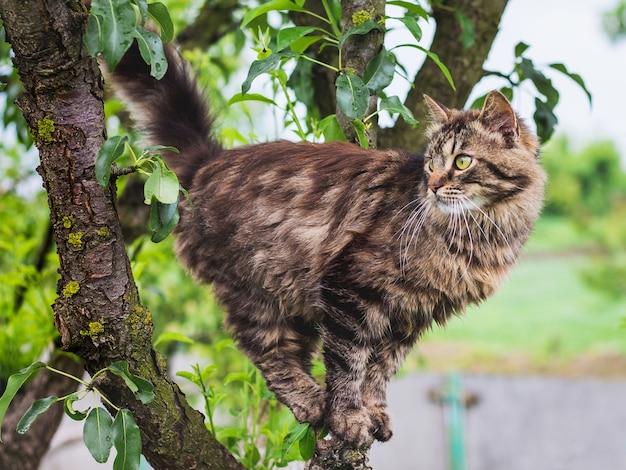 녹색 잎 한가운데 나무에 솜털 줄무늬 고양이
