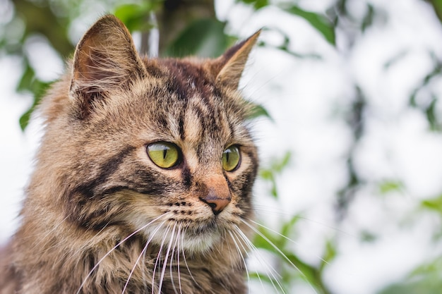 緑の葉の真ん中にある木の上のふわふわの縞模様の猫