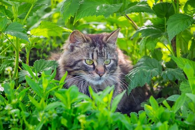 ふわふわの縞模様の猫が草の茂みに座っています_