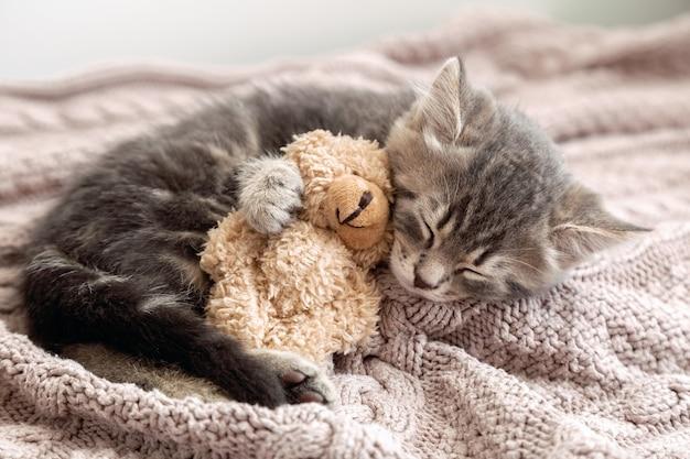 Пушистый полосатый котенок дремлет, удобно обнимая плюшевого мишку на вязаном розовом пледе. маленькая кошка спит на уютном одеяле, обнимает игрушку. котенок сладких снов.
