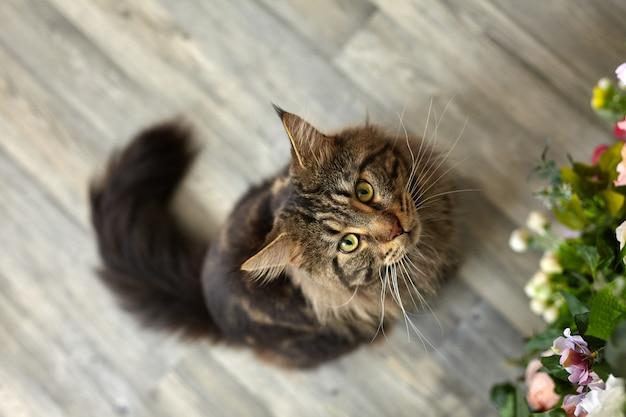 床に座っているふわふわのべっ甲猫。