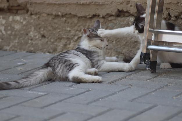 鉄の階段キットの近くの家の壁で遊んでいる晴れた日にふわふわの2匹の灰色がかった白い猫