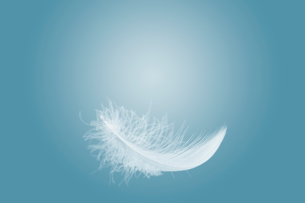 Fluffy a white feather floating in the air