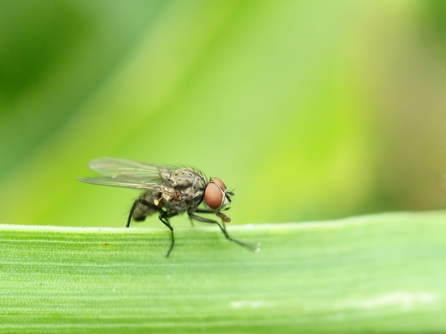 Fly on the edge of a plant