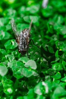 Fly on green sprouts of chia close up