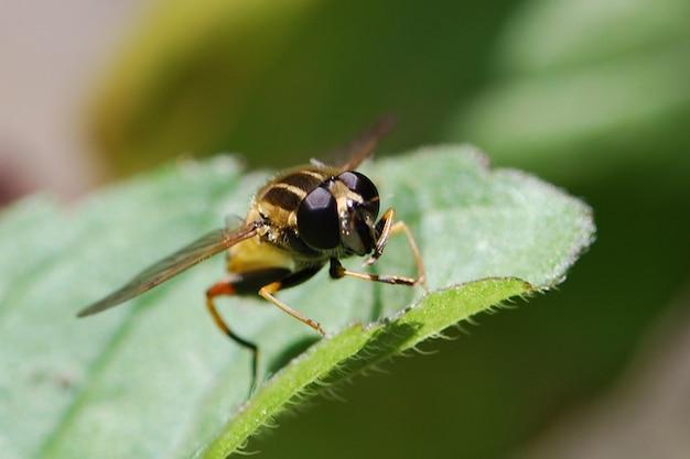 マクロ近い動物ホバー自然昆虫を飛ぶ