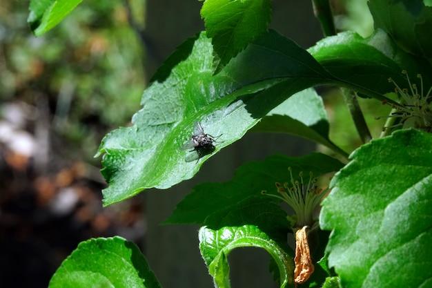 緑の葉の上を飛ぶ