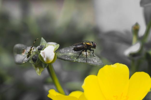 꽃 위를 날다
