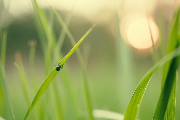 日没で草の上を飛ぶ