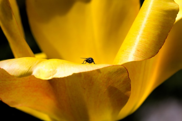 Fly sitting on the yellow petals of a flower