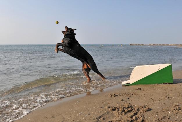 해변에서 플라이볼