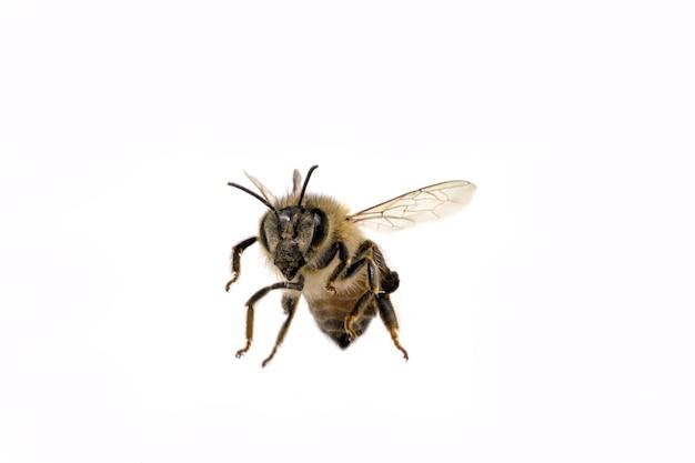 孤立したハチを飛ばす