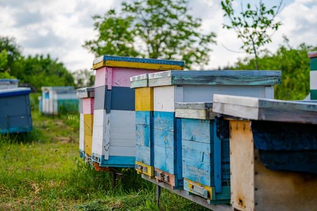Летят пчелы возле улья. деревянный улей и пчелы. множество пчел у входа в улей на пасеке. рабочие пчелы на доске. рамки улья. солнечный день - прекрасное время для сбора меда