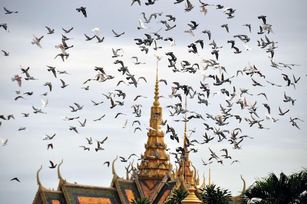 東洋の寺院の上を飛ぶ鳥、カンボジアのプノンペンの王宮の上を飛ぶ鳩。