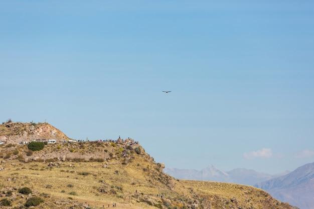 Colca 협곡, 페루에서 콘도르 비행